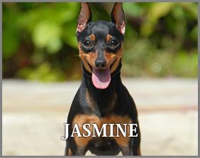 jasmine_dog