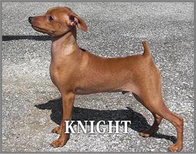 knight_dog