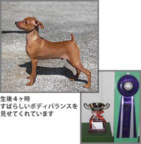 knight_dog_img_021
